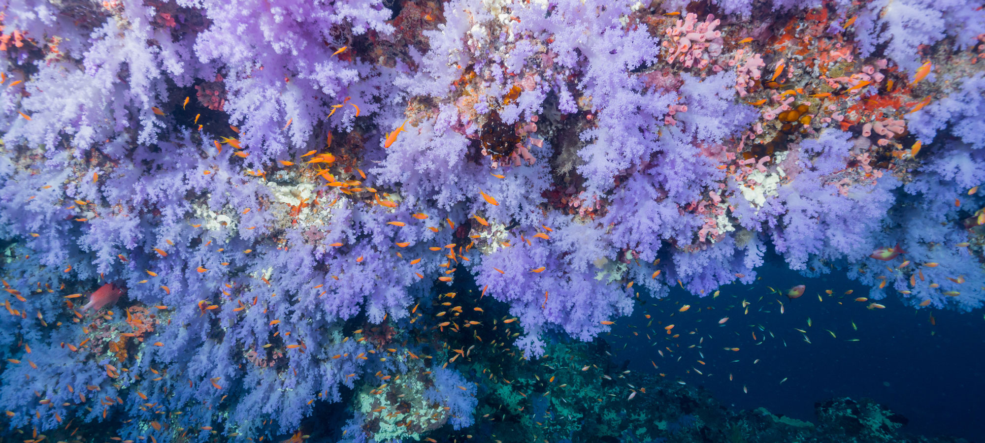 Five Best Places for Scuba Diving in Fiji