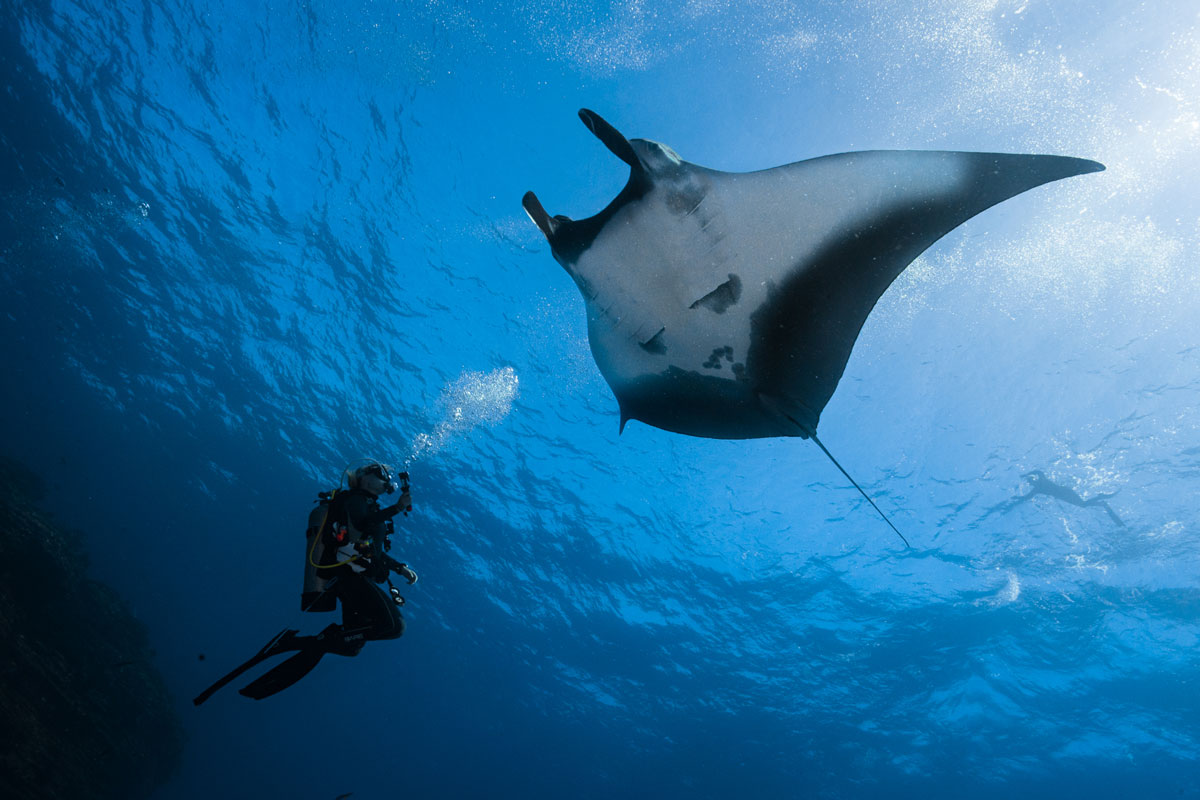 Dive Ninja Expeditions: 100 Percent Aware and on A Mission to Further Conservation through Tourism