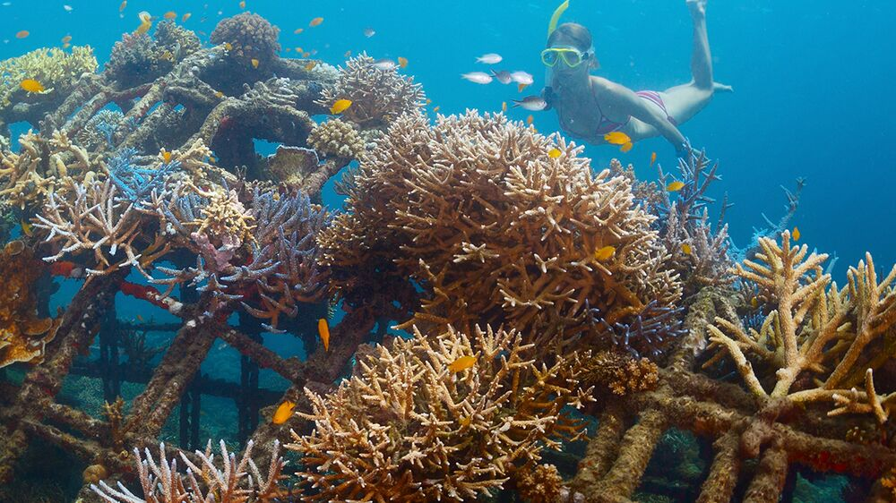 Coral reef restoration project in Bali