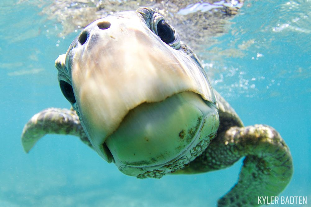 8 turtle y great shots from the 2017 through your lens photo contest