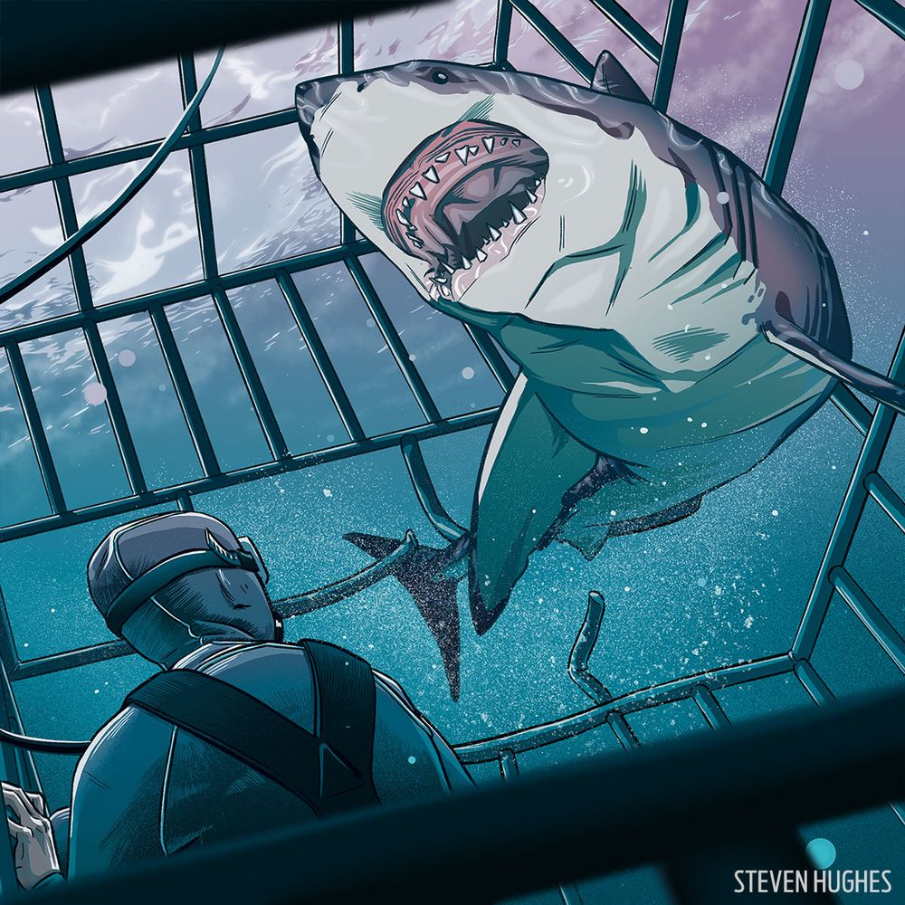 what it u0027s like when the shark gets in the cage scuba diving