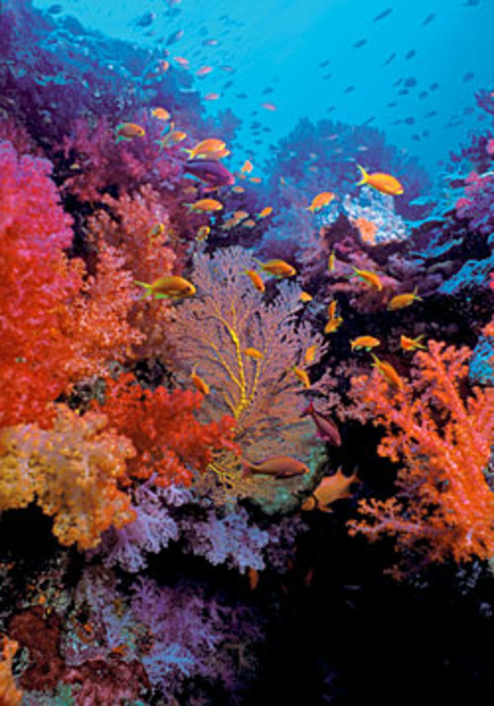 Fiji In Living Color | Scuba Diving