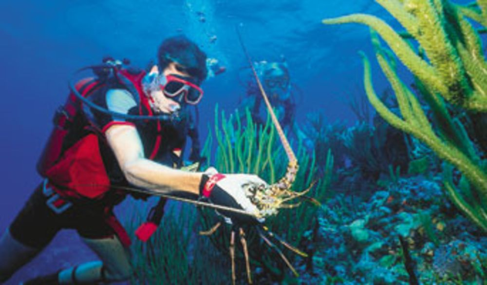 Florida And Keys Lobstering Guide