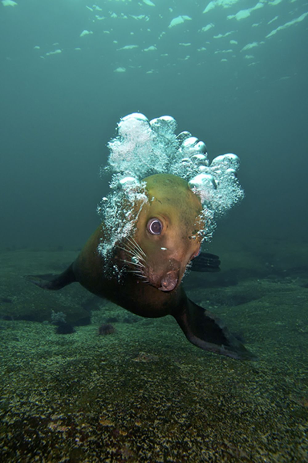 United states of scuba diving the country we love scuba diving playful pinniped xflitez Images