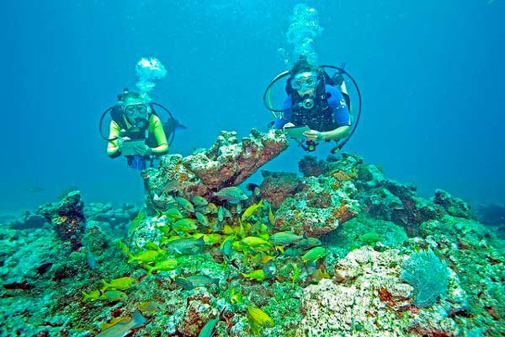 Things You Can Do For The Ocean Scuba Diving - 23 amazing things divers discovered bottom ocean