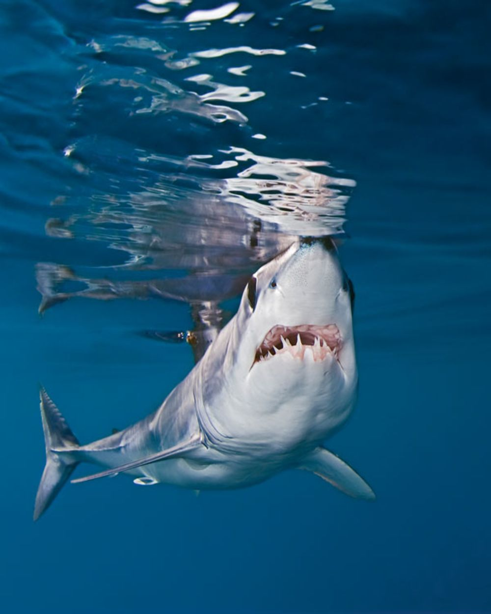 25 best shark diving destinations shark photos scuba diving