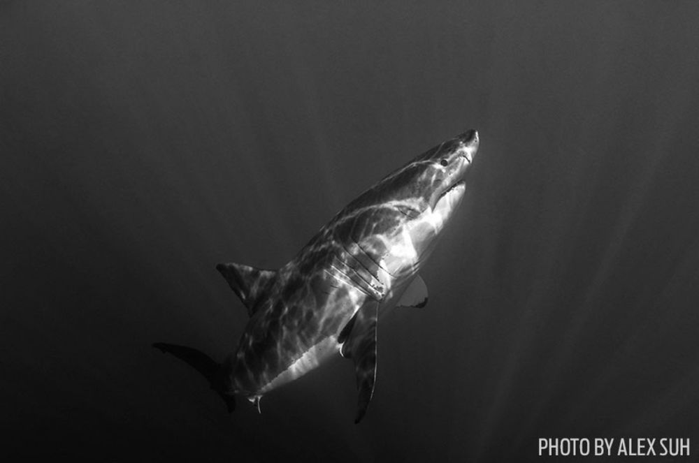 Photo contest 2014 black and white underwater photography
