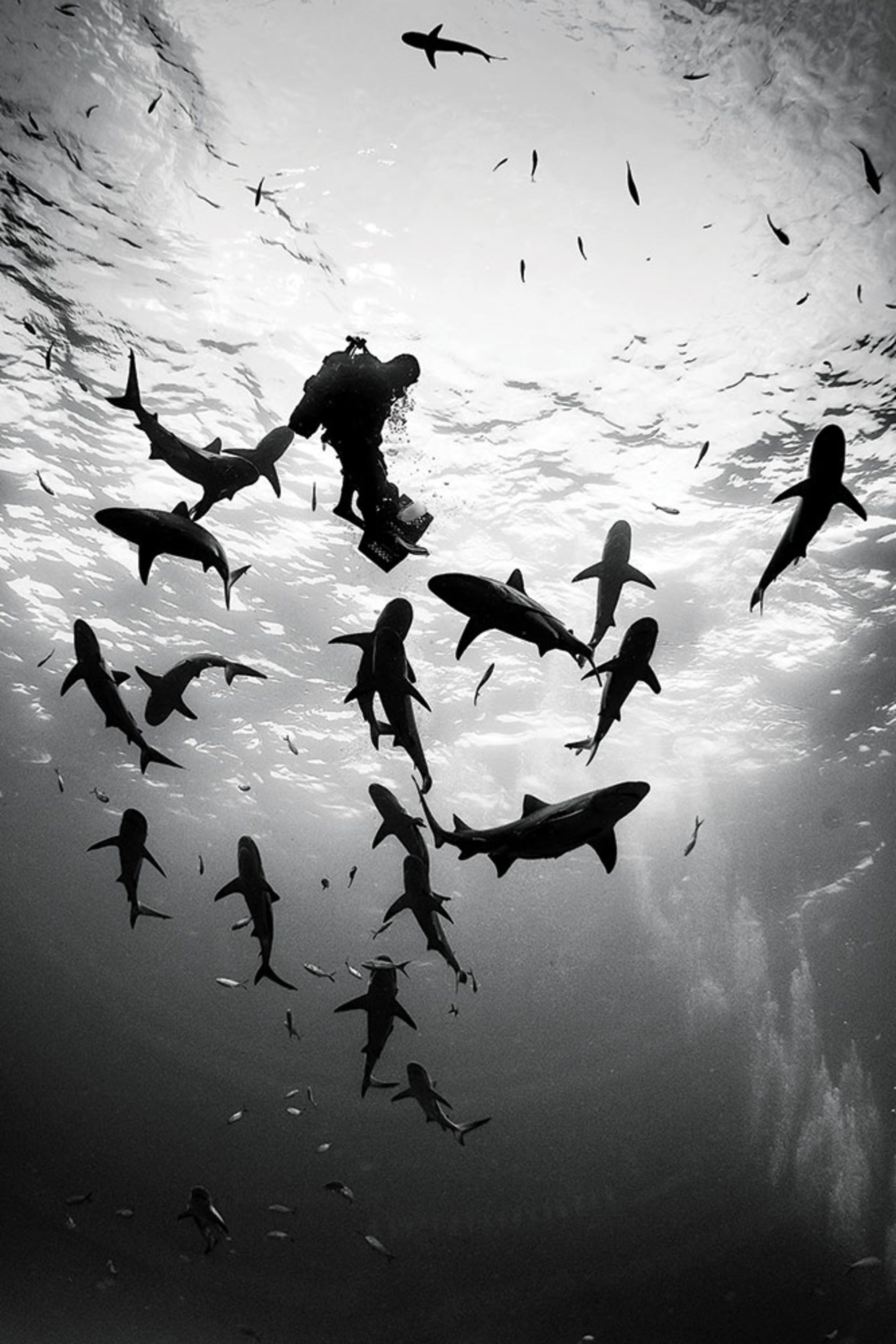 Tips for Scuba Diving with Sharks