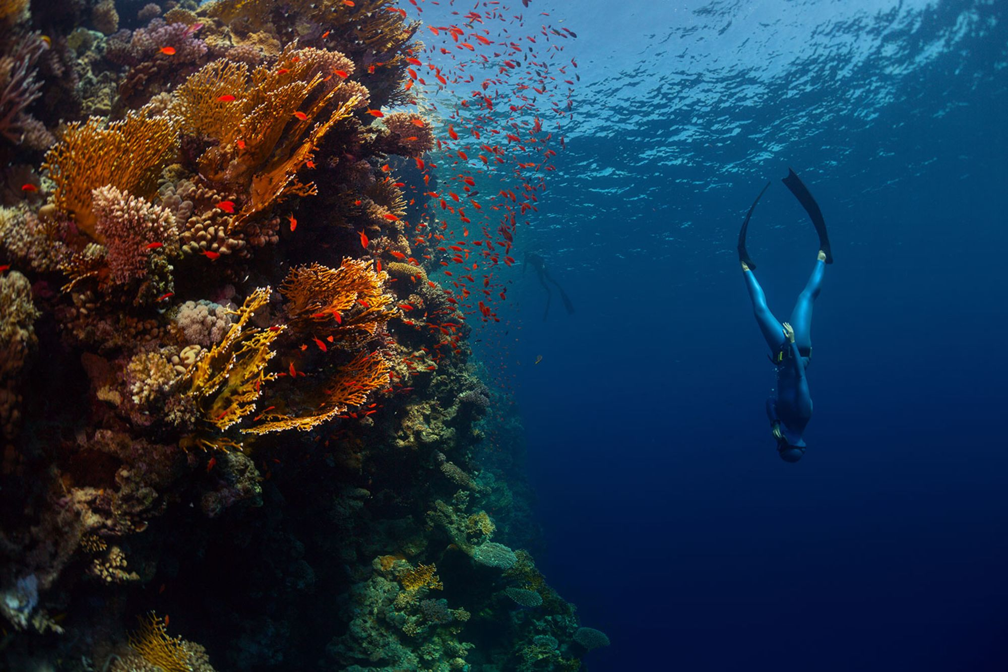 25 New Year's Resolutions Only Scuba Divers Make