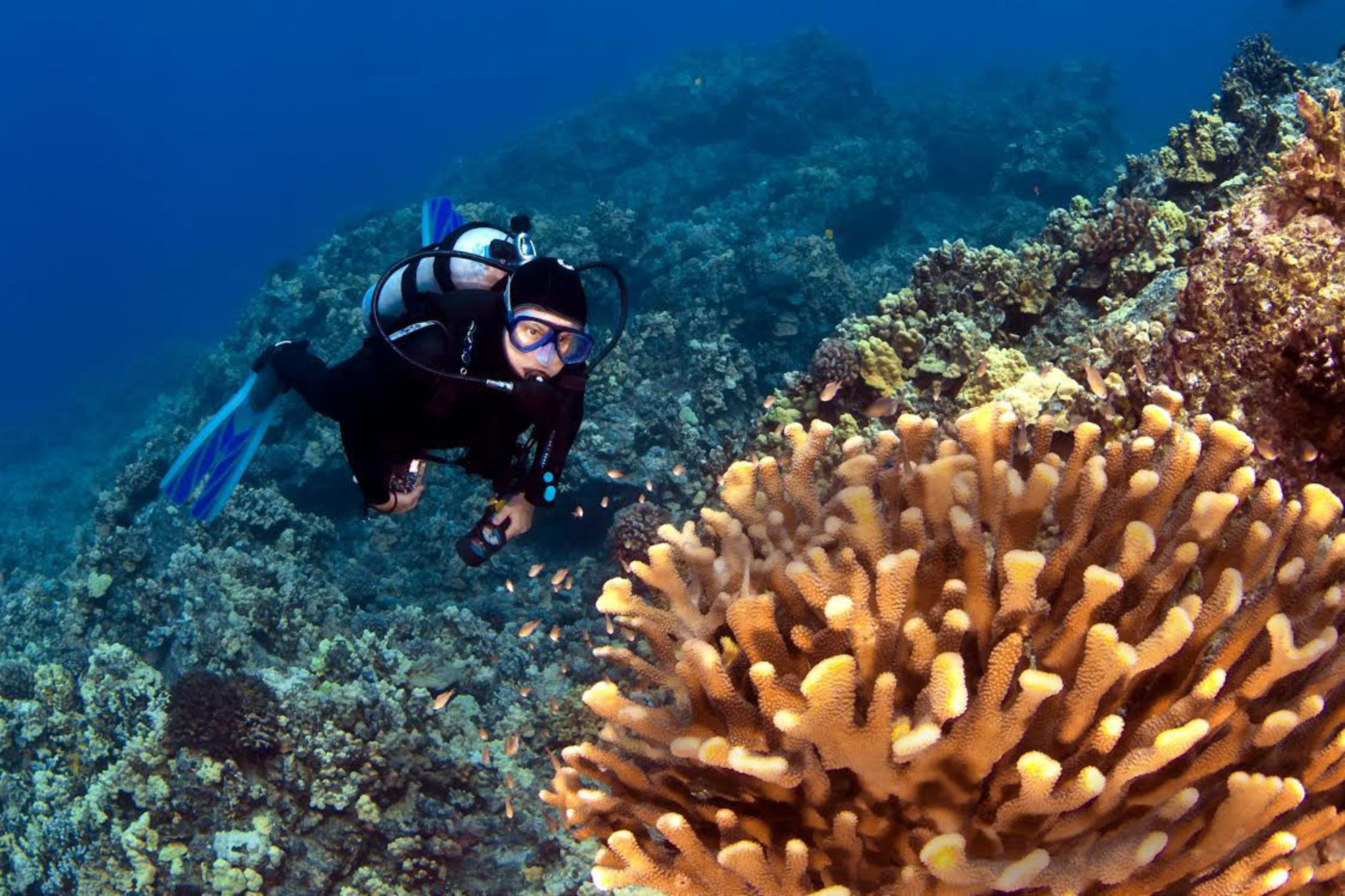 7 Things to Love about Scuba Diving in Kona, Hawaii