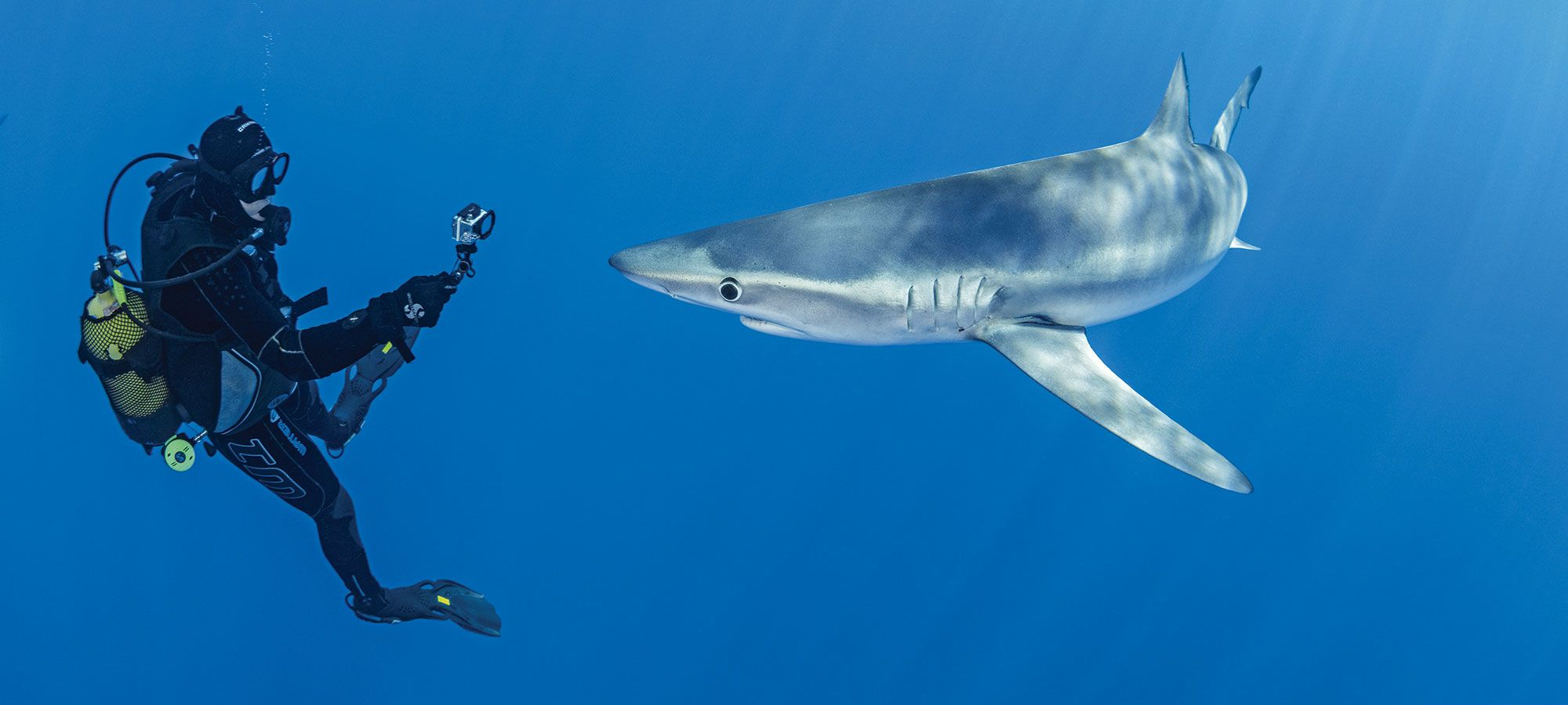 Epic Pelagic Action Awaits Divers in the Azores