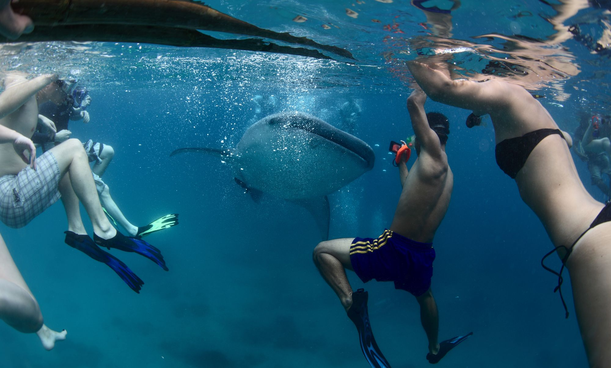How Well-Intentioned Divers Are Hurting Shark Conservation