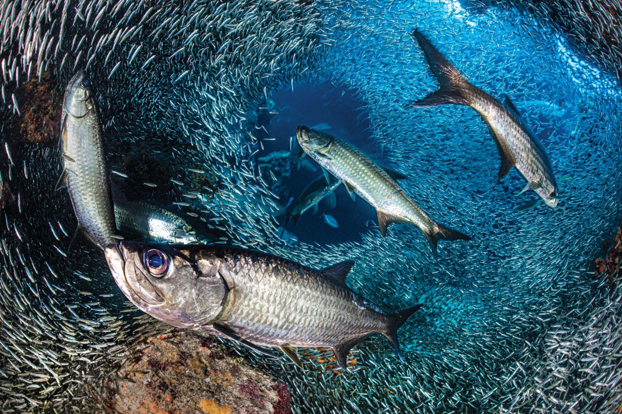 How To Plan Your Dive Travel as an Underwater Photographer