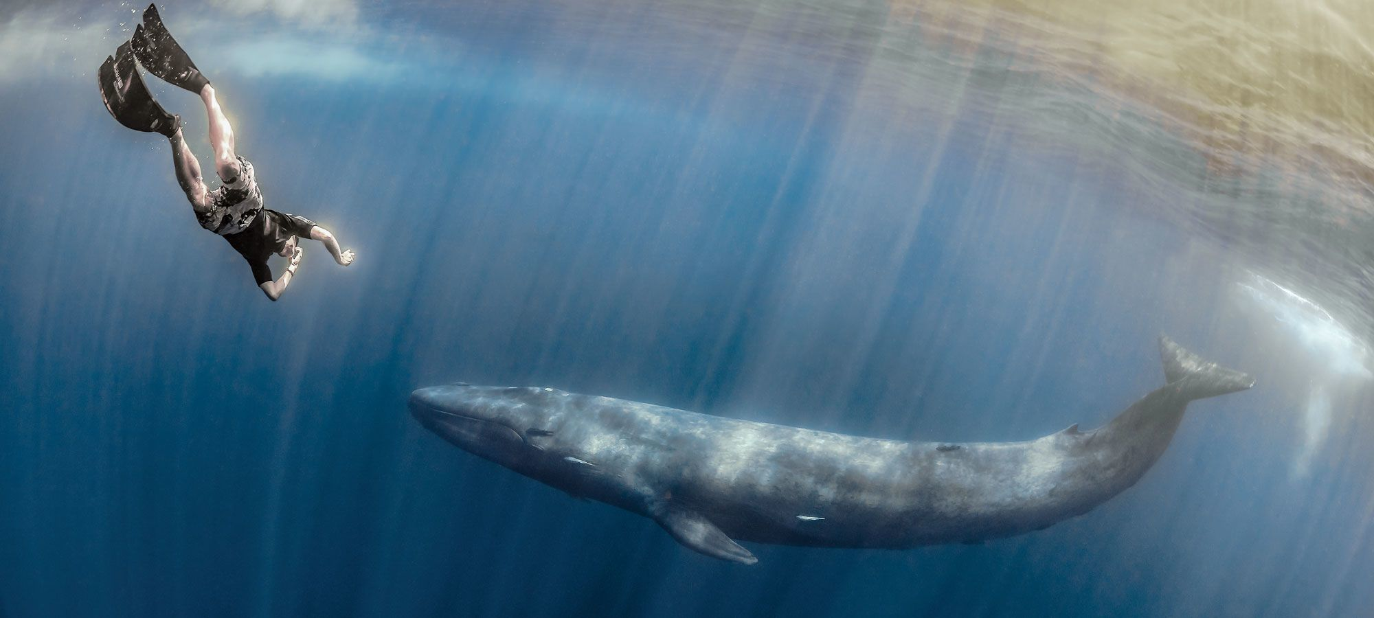 The Island of Giants: Swimming with Blue Whales in Sri Lanka