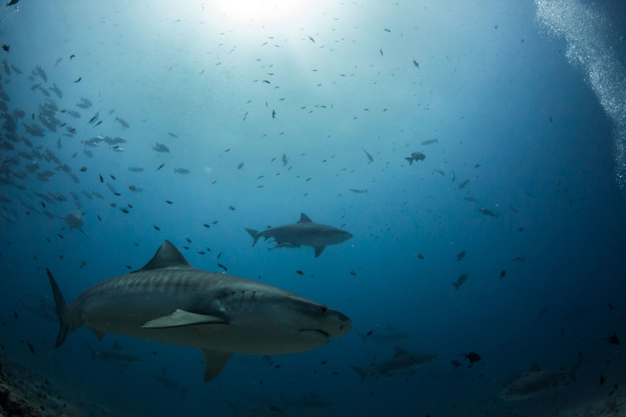 Even More Amazing Shark Facts You Haven't Heard a Million Times