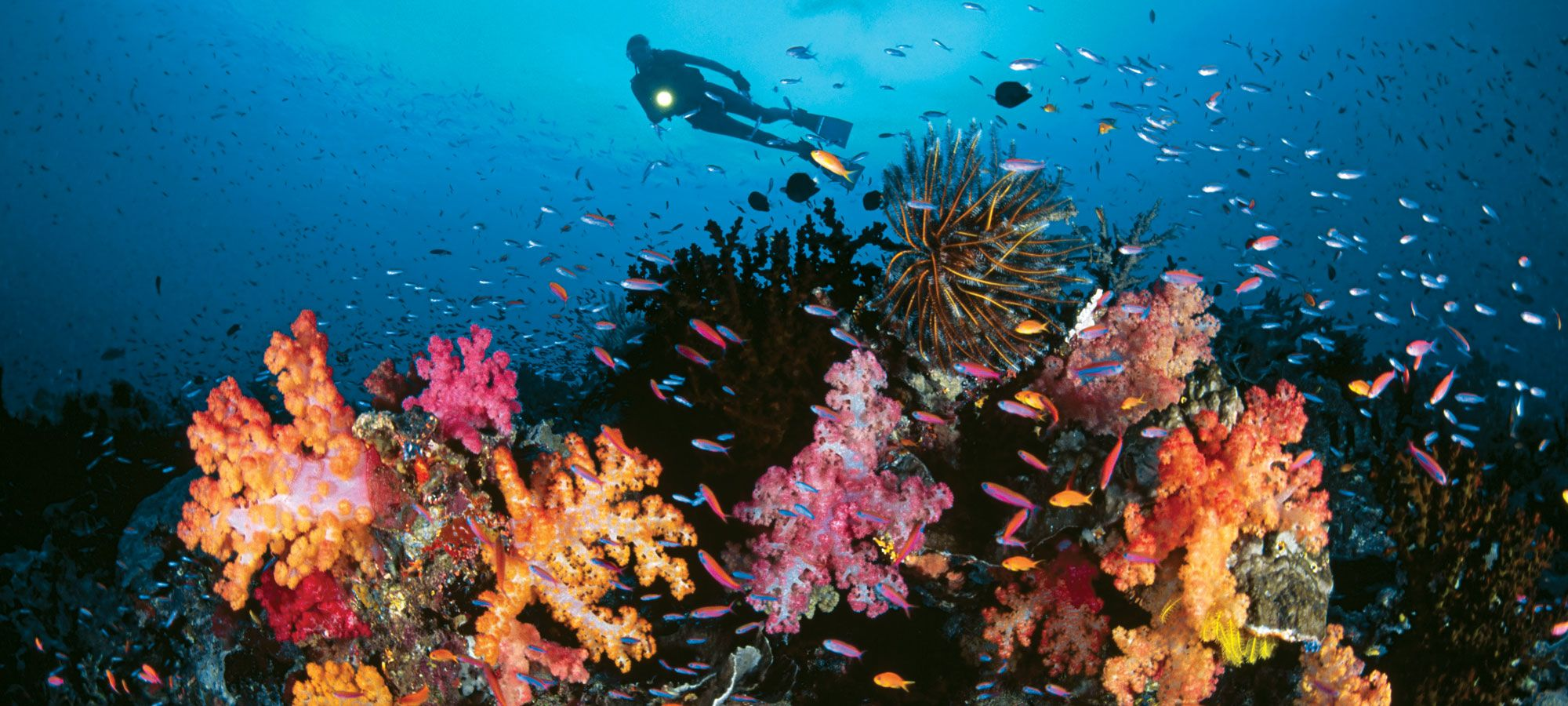 The Top Nine Dive Capitals of the World