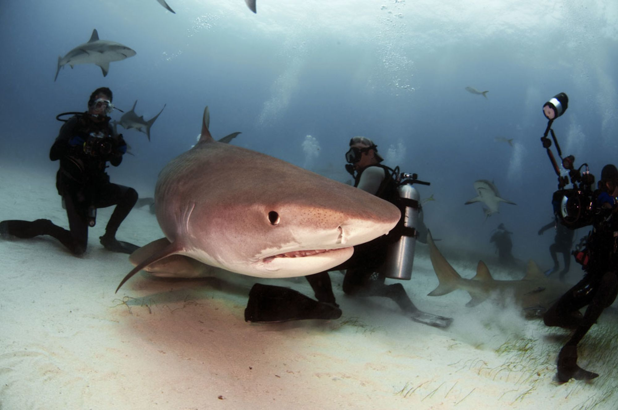 Can Wildlife Tourism Solve the Shark Conservation Crisis?