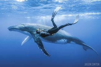 Freediver and Humpback Whale