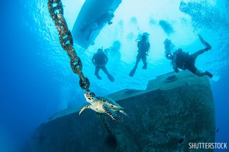 Scuba diving wreck with sea turtle Kittiwake Grand Cayman