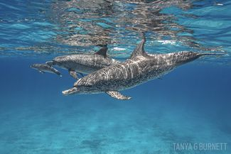 dolphin underwater photography tips