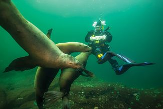 scuba diving with sea lions British Columbia