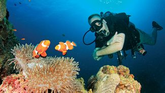 Clownfish Facts: 6 Things You Didn't Know