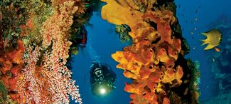 The Ultimate Divers Guide To Indonesia