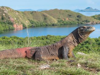 How Komodo Island Closing Would Affect Divers