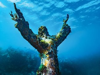 Where To Go Scuba Diving in Key Largo