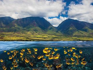 Racoon butterfly-fish and Maui mountains