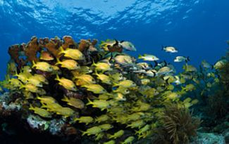 Diving in the Florida Keys National Marine Sanctuary