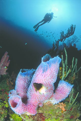 Thrill Rides: 8 Great Shore Diving Spots