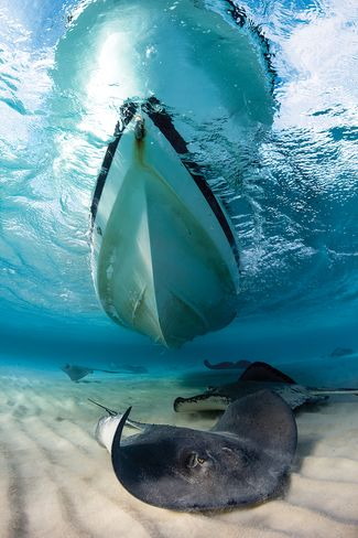 best overall diving destinations