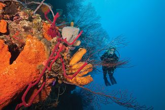best wall dives for scuba diving