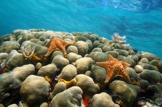 Underwater coral with starfish