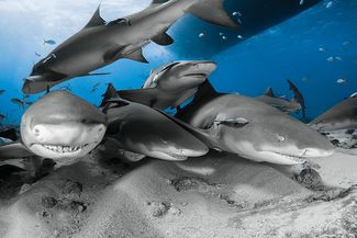 25 Best Destinations for Scuba Diving with Sharks