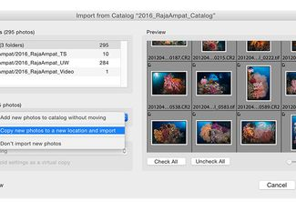 Adobe Lightroom Catalogues and Help