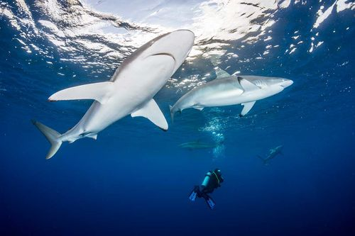 Report on 2017 Shark Attacks and Deaths Released by