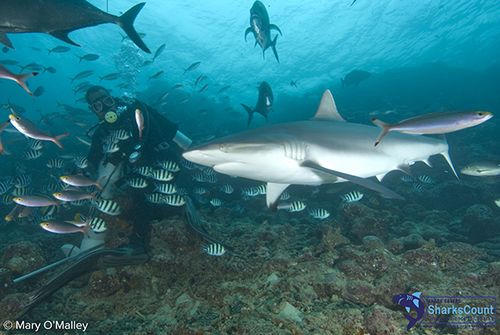 Divers Guide To Marine Life: Sharks | Scuba Diving