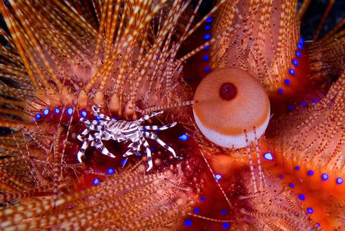 Kooky, Cool and Cute Crustaceans: A Photo Contest Gallery