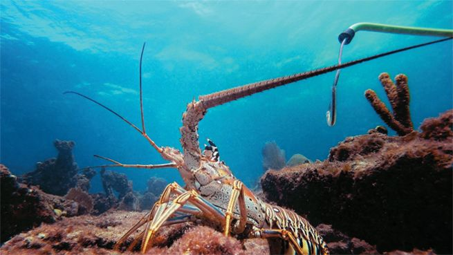 Gear Up With The Lobster Hunting Experts At Divers Direct