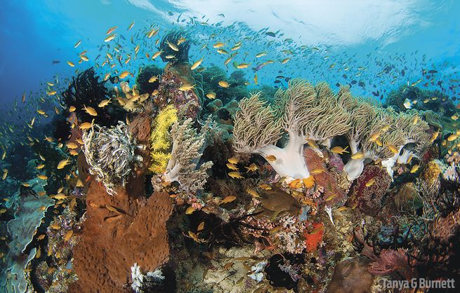 Diving Papua New Guinea From The M/V Chertan Liveaboard