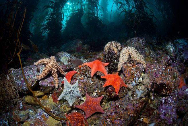 5 Best Places To Dive In North America