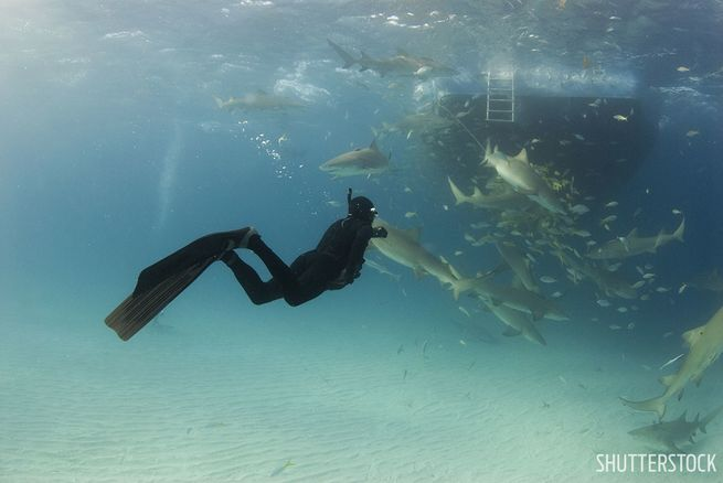 Best Destinations For Freediving