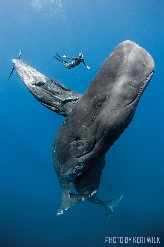 The Best Places to Swim with Sperm Whales | Scuba Diving