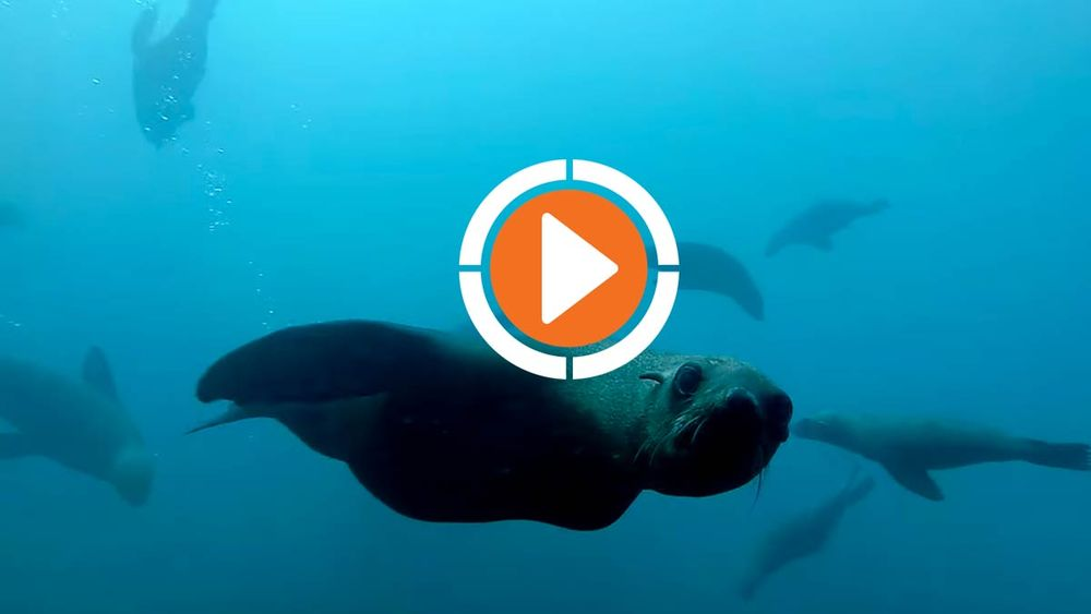 Freediving with Seals in South Africa GoPro Video Underwater