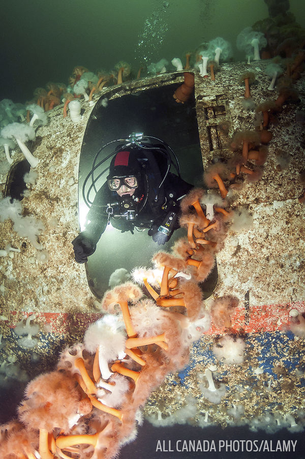 Underwater Photo Diver in Air Canada Wreck British Columbia