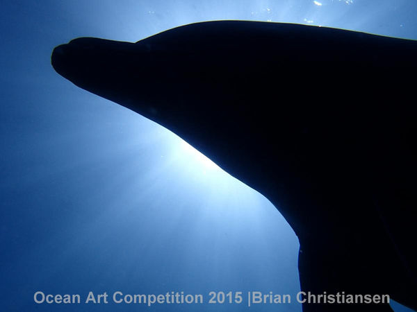 dolphin backlit underwater photography