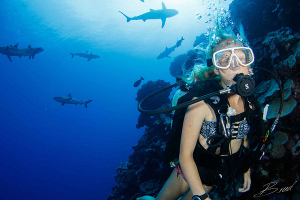 kids scuba diving sharks underwater photo