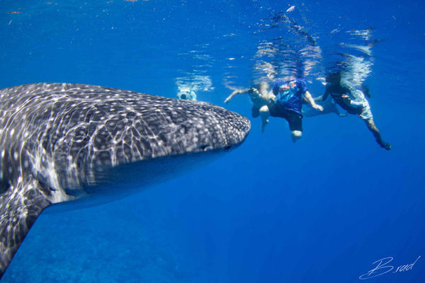 kids sea camp scuba diving whale shark underwater photo